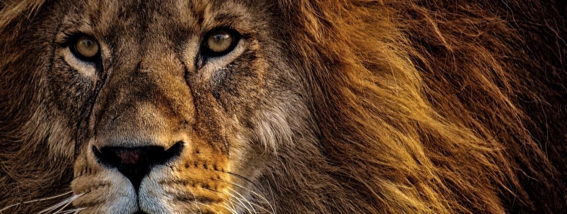 asertywność online bądź jak lew